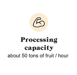 Processing capacity: about 50 tons of fruit / hour
